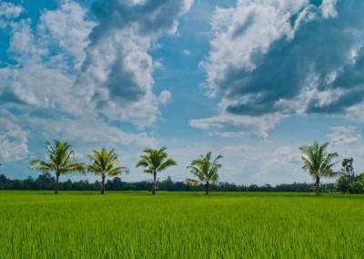 Palmen Und Wolken