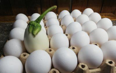 Egg(plant)